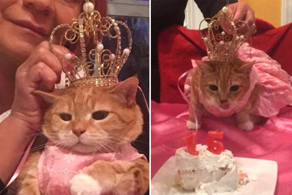 """穿粉裙戴皇冠!美主人为猫咪举办15岁""""成人礼"""""""