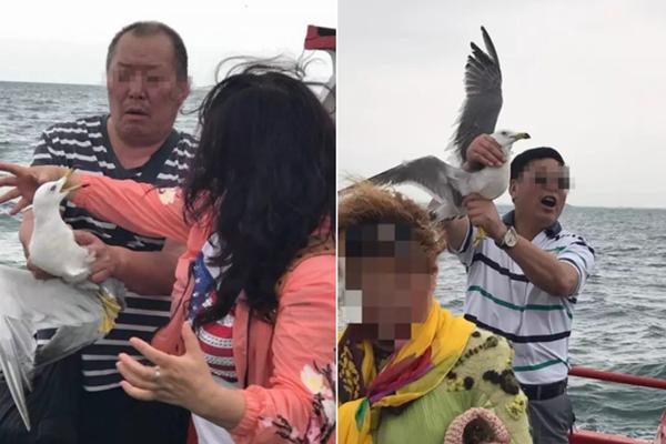 海鸥被游客擒拿拍照 脖子几乎被扯断