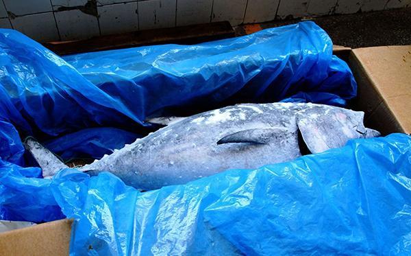 京东出售濒危金枪鱼 遭环保组织质疑后下架