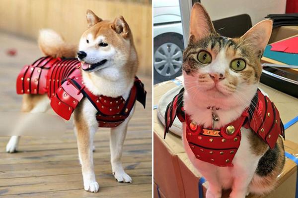 威风凛凛!日本公司给宠物猫狗定做武士服