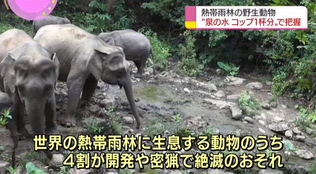 日本研发新技术 通过泉水确定野生动物种类