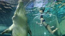 恐怖:女子自拍被巨鳄一口吞掉  全程不到一秒