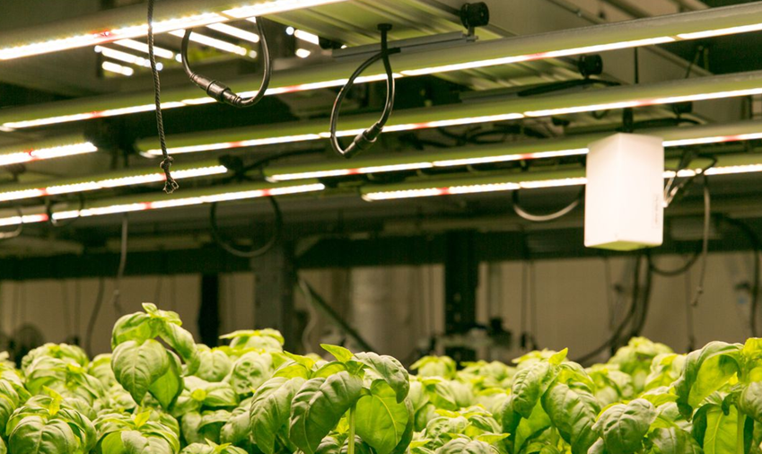 揭秘美国高科技未来农场:蔬菜产量提高100倍