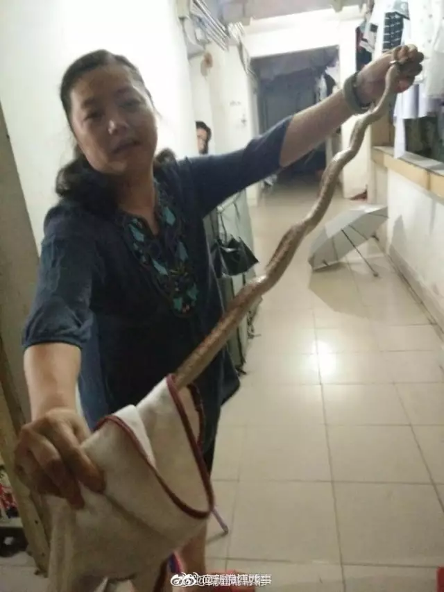 大蛇夜闯江西一高校宿舍 女教师徒手擒蛇做成夜宵