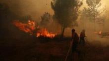 葡萄牙中部森林火灾已致44人死伤2人失踪