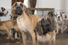 美救援队解救88只被虐小狗