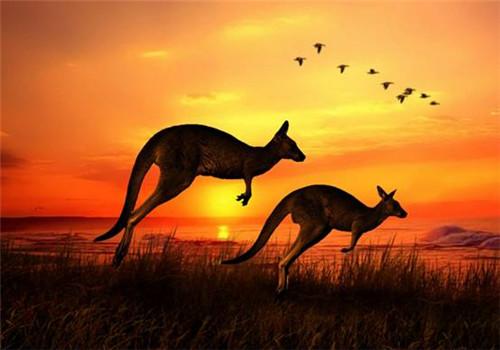 为方便游客 澳大利亚拟废除出入境卡简化程序