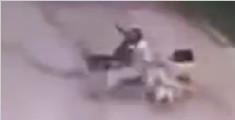俄男子坚持喂流浪狗两年 忘带食物遭狗围攻身亡