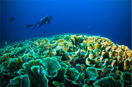 印尼布纳肯:丰富多彩的海底世界