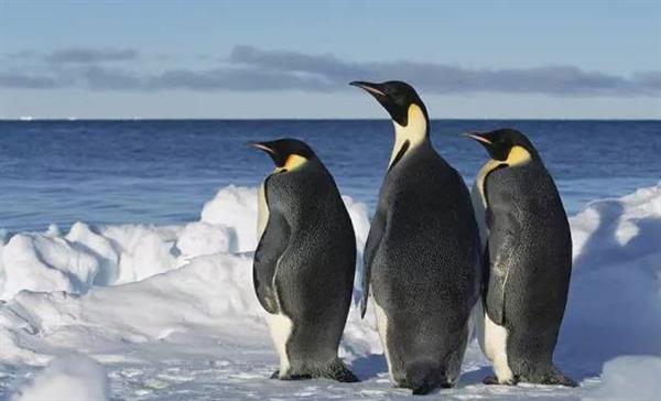 史前巨型企鹅揭秘:身高竟超过2米!