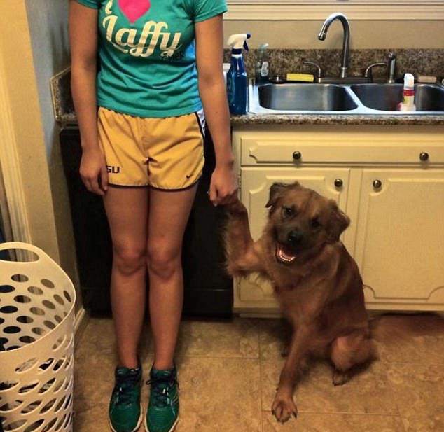 请不要说你是我的狗,太蠢了图片