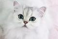 最萌最撩人的猫眼妆,可爱也是性感的一种方式