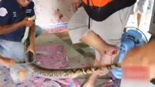 4米蟒蛇挂房梁 警员捕捉被咬