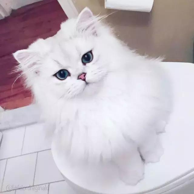 最萌最撩人的猫眼妆,可爱也是性感的一种方式!