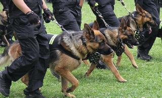 300只警犬搜毒搜爆各显神通
