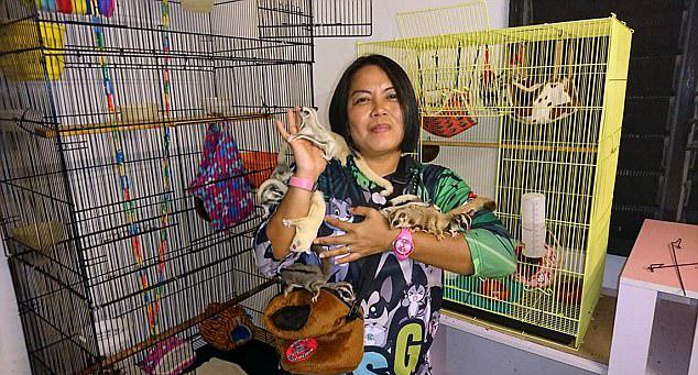 马来女子训练七只蜜袋鼯 可飞入手中惹人爱