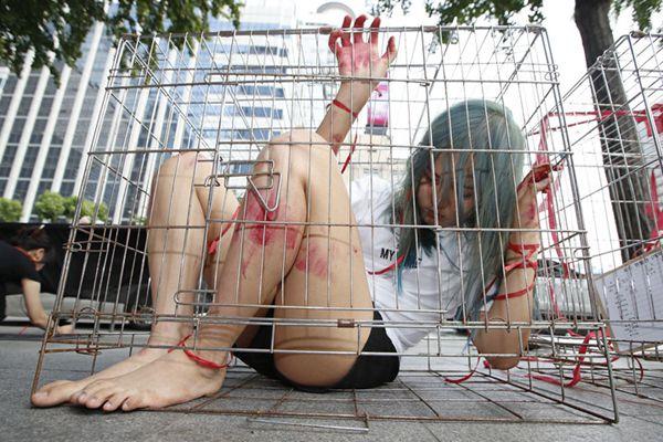 韩国女子扮成笼中困兽 悼念遭宰杀动物