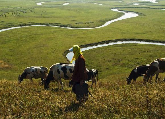 """西藏金融深入农牧区 """"瞄准""""扶贫产业"""