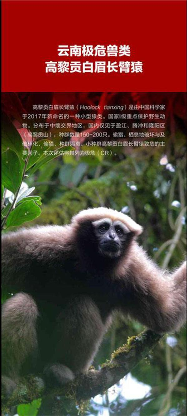 云南发布首个省级红色物种名录:18个物种已绝灭