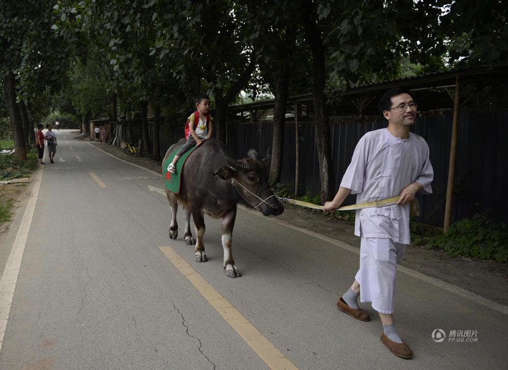最牛座驾 成都3岁娃骑牛骑驴上幼儿园