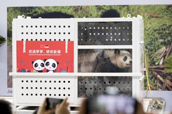 """中国大熊猫""""梦梦""""""""娇庆""""抵达德国柏林"""