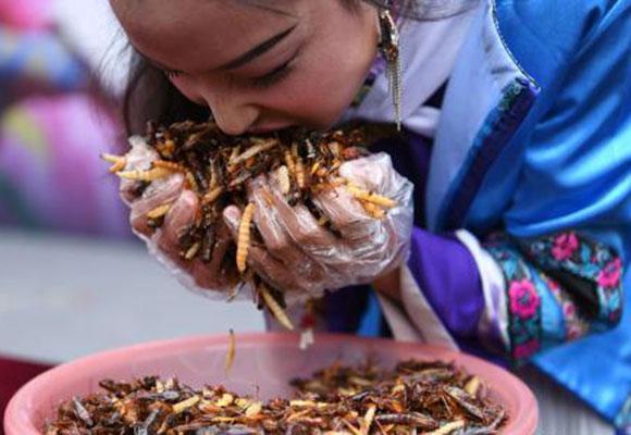 丽江一景区举行吃昆虫比赛 游客吃2斤昆虫获金条