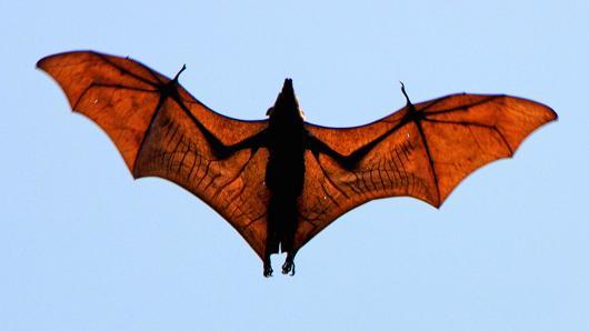 美研究揭示全球流行病高发区/病毒携带物种