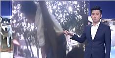 尴尬!男孩爬上树玩结果被卡树杈动弹不得