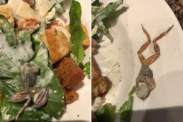 恶心!美女子餐厅沙拉中吃出死青蛙