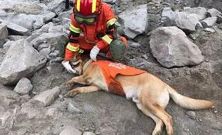 四川茂县山体垮塌救援现场:搜救犬累趴下