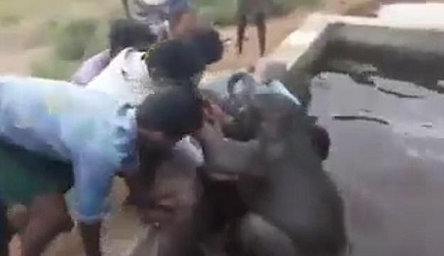 暖心!印度小象失足掉入蓄水池获村民齐心救援