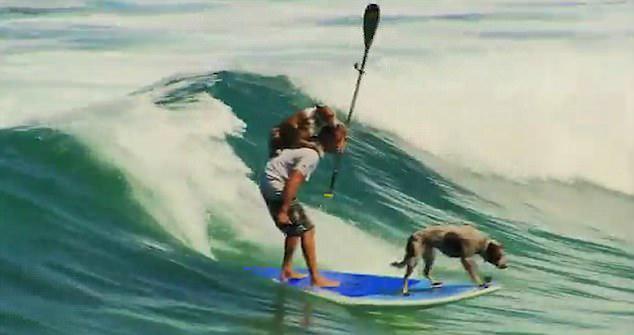 会玩!澳男子带狗狗一起冲浪蹿红网络