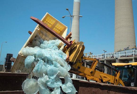 """水母袭击以色列发电厂 员工挖掘机送走""""不速之客"""""""