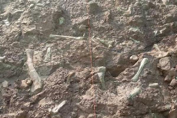 """重庆发现世界级""""恐龙化石墙""""长约5公里"""