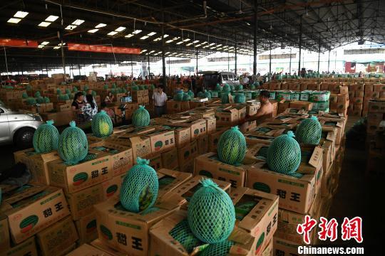 重庆多雨季节水果市场西瓜滞销