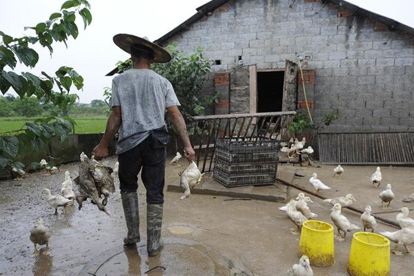浙江兰溪洪水稍退 受灾居民损失严重