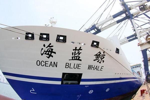 """""""海蓝鲸""""号正式运营 可载约810名旅客"""
