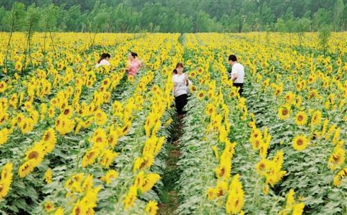 乡村游火爆的背后:资本下乡不能挤占农民利益