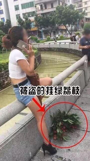 天价挂绿荔枝50多万一颗 女子偷摘一把淡定开吃?