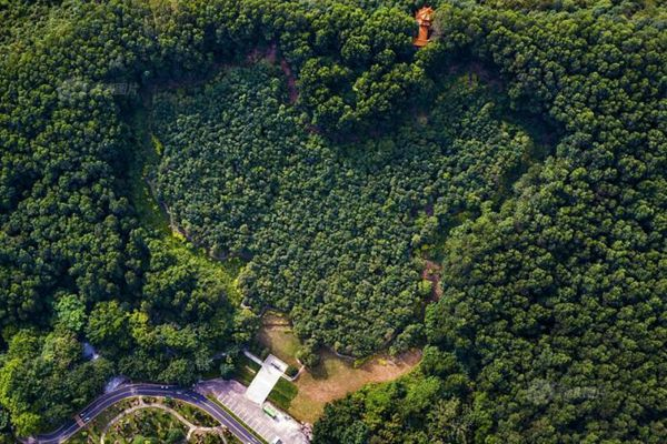 香港回归纪念林枝繁叶茂 1997棵幼苗已参天