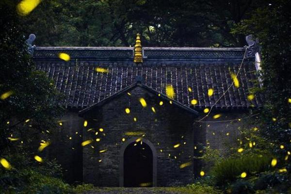 南京灵谷寺萤火虫夏夜飞舞 好似点点繁星