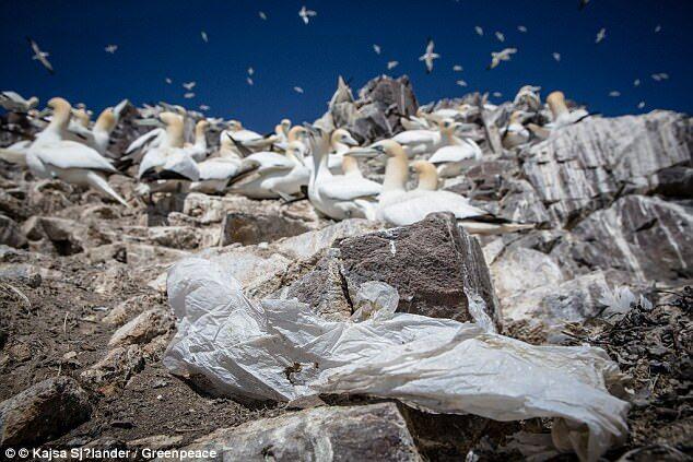 专家警告:塑料污染对环境破坏力堪比气候变化