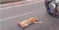 小狗被绑车后惨遭拖行