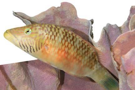 海洋动物怎么睡觉呢?鱼类睡觉好比人类打盹儿
