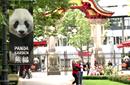 """熊猫""""外交官""""期待""""首秀"""""""