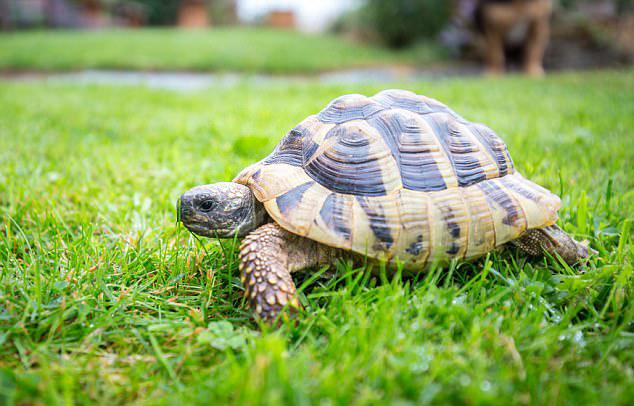 神奇!英宠物龟失踪2年后奇迹回到主人家
