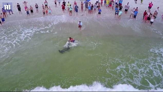 无人机拍下美国渔民海滩捕获双髻鲨全过程