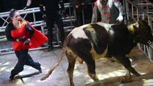 实拍美女徒手摔倒600斤壮牛 年仅23岁痴迷掼牛