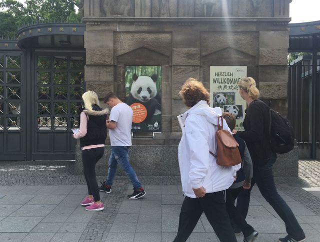 """柏林:大熊猫""""外交官""""开心期待""""首秀"""""""
