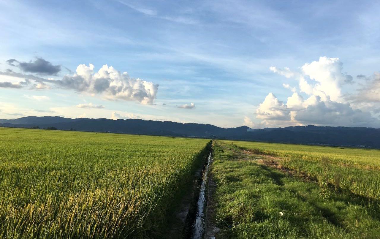 人物|西双版纳庄林海:植保无人机效率这么高 为何农民难接受?